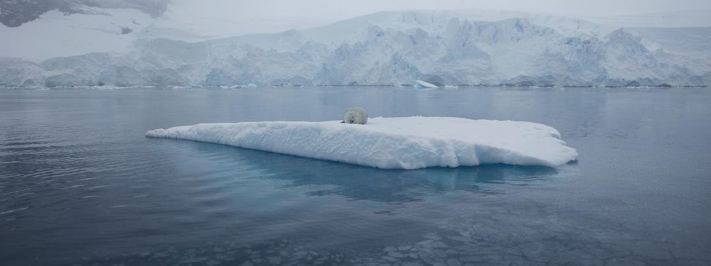 Cover image for App to observe polar ice cap reduction
